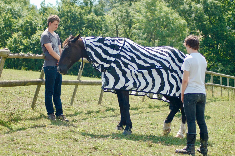 How zebra stripes disrupt flies' flight patterns - Horseyard.com.au