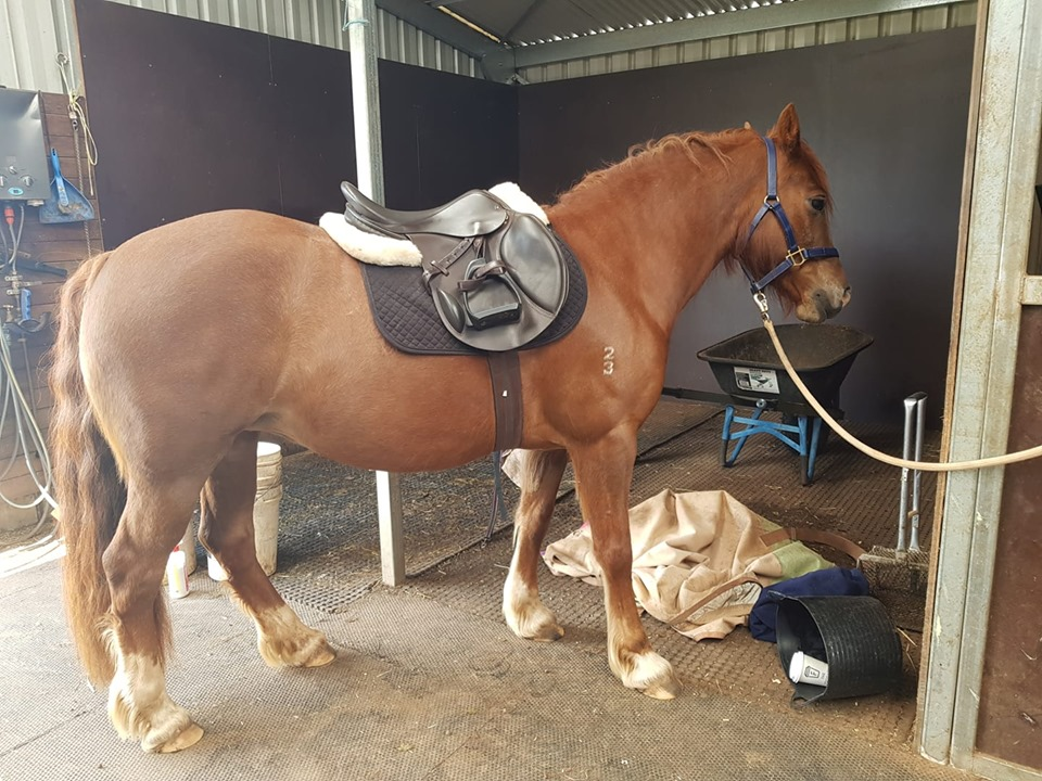 Is my horse/pony obese and should I be worried about it?