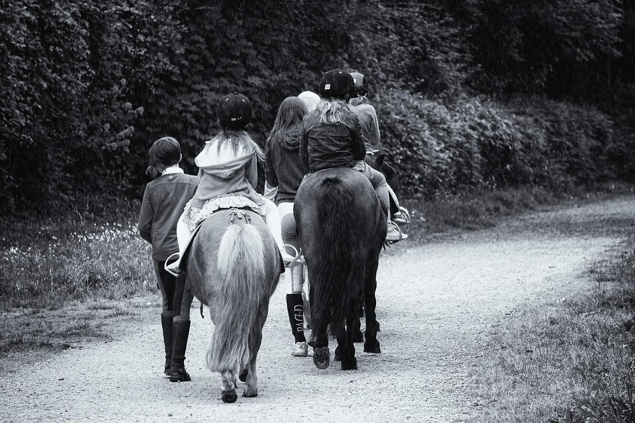 Lost in Translation - Horseyard.com.au