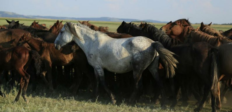 A genomic tour-de-force reveals the last 5,000 years of horse history - Horseyard.com.au