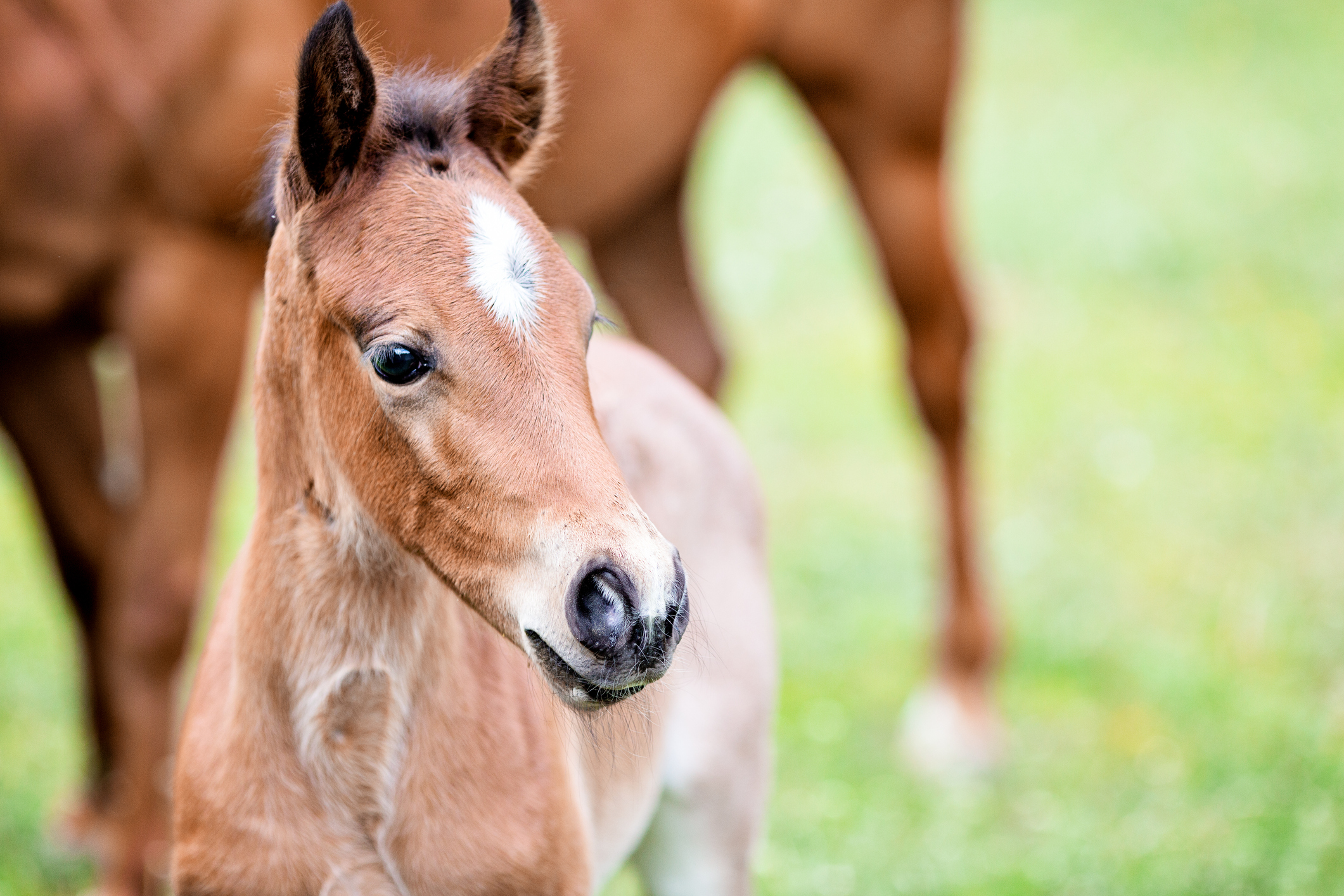 Can foundation training in Thoroughbred foals make a difference to welfare and performance? - Horseyard.com.au