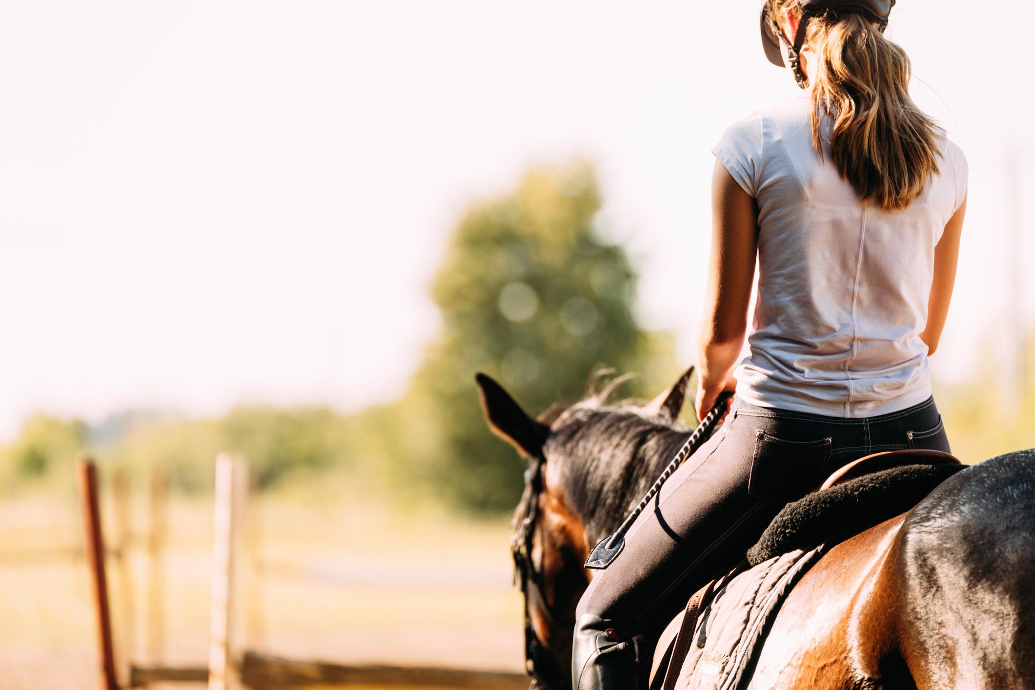 Behaviour differences between geldings and mares challenge sex stereotypes in equine behaviour - Horseyard.com.au
