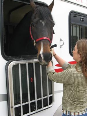 Can behaviour indicate disease risk in horses travelling long distances? - Horseyard.com.au