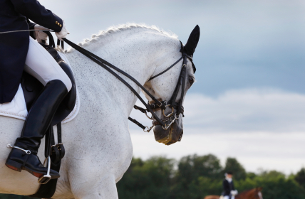 Are we training our horses more than necessary? - Horseyard.com.au