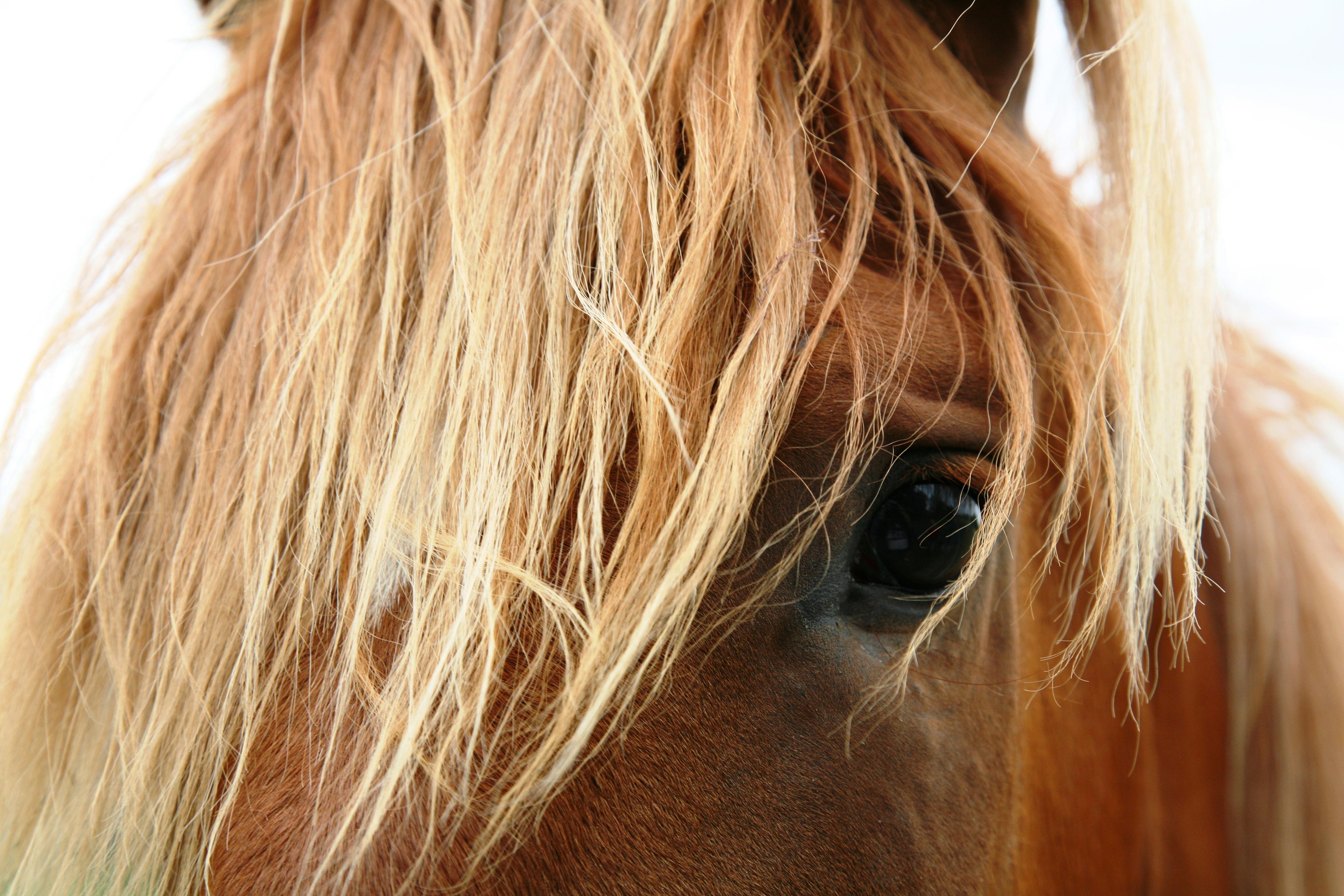 Horses saddled with gender bias: mares seen as 'bossy' - Horseyard.com.au