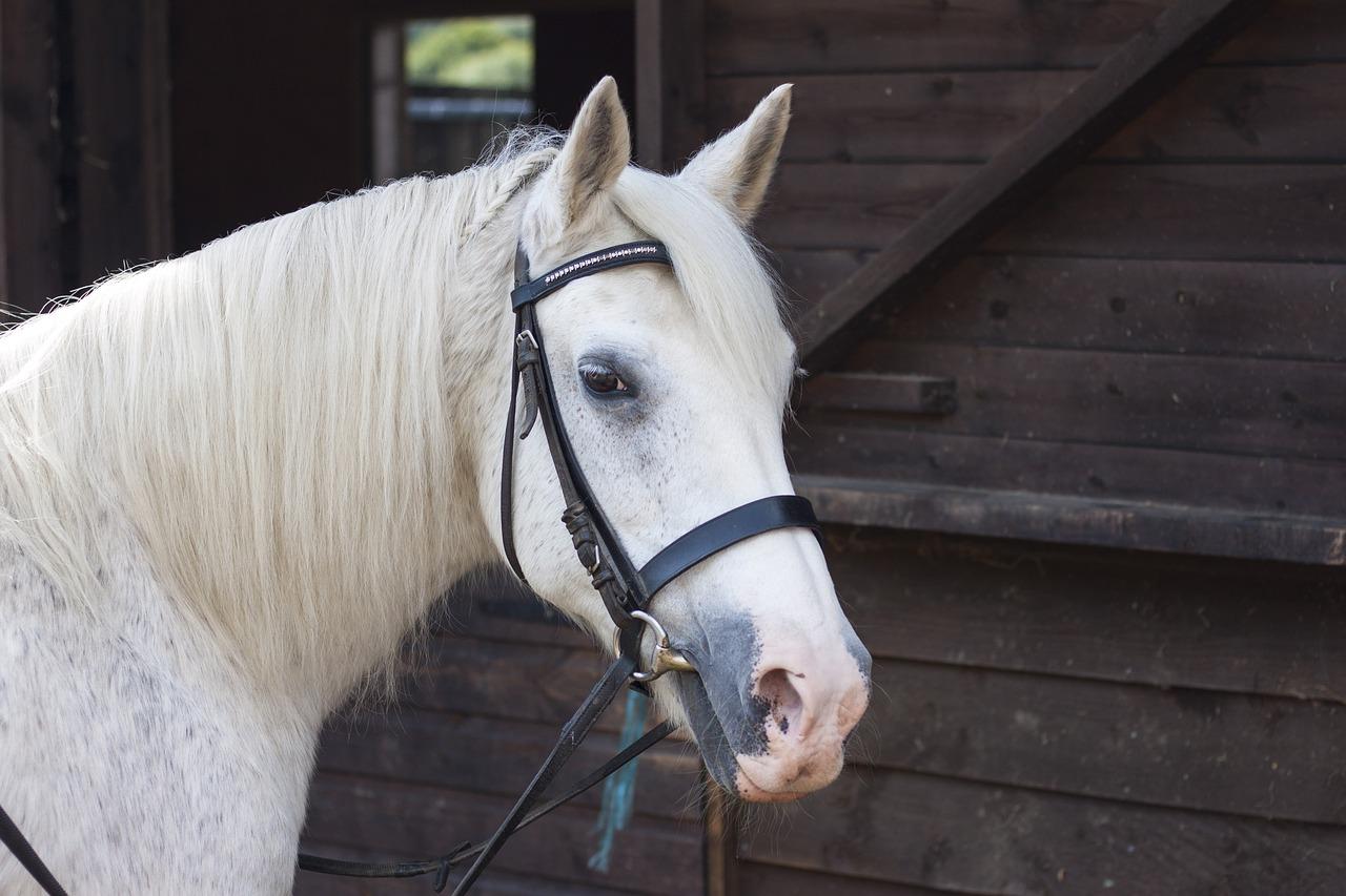 A Calmer Horse is Just a Sniff Away - Horseyard.com.au