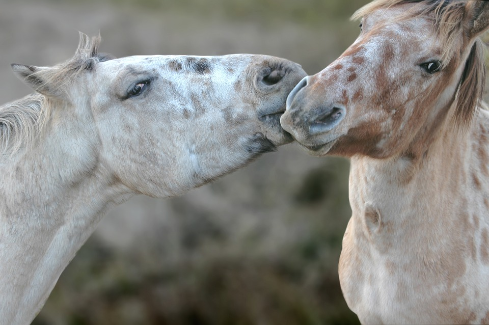 Veterinarians give the thumbs up to traceability - Horseyard.com.au