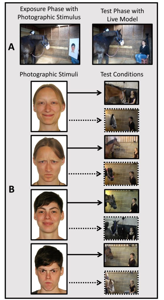 Study finds horses remember facial expressions of people they've seen before - Horseyard.com.au