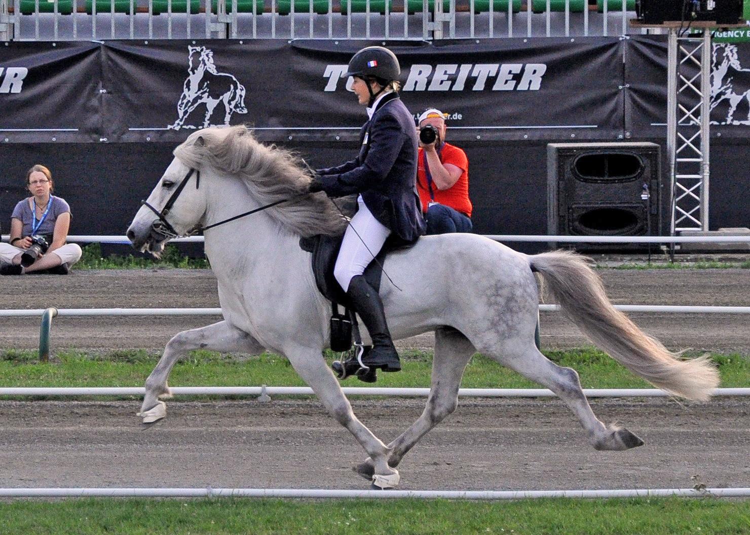 How the Vikings spread gaited horses across the world - Horseyard.com.au