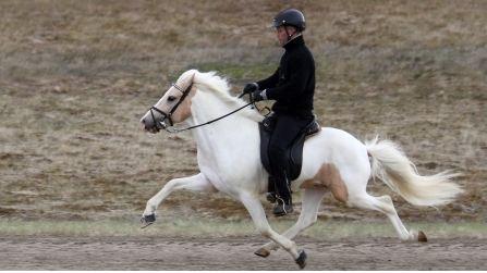 Single Mutation Affects Gaits In Horses