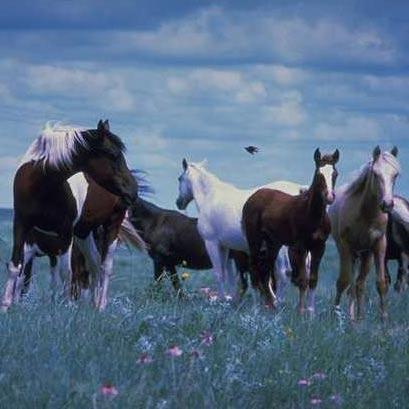 National Horse Forage Survey