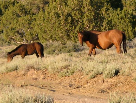 Horse Lovers Unite To Save Nevada's Wild Horses From Kill-Buyers