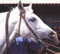 A Bit About Bits. Is The Snaffle The Most Dangerous Bit Of All?
