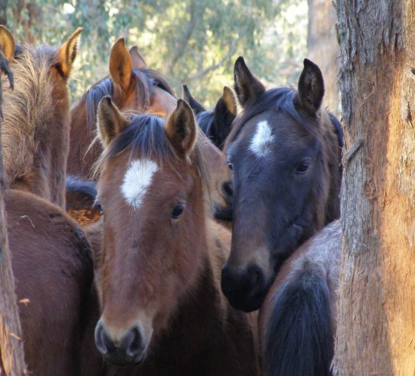Bid For Record – Biggest Trail Horse Ride In History