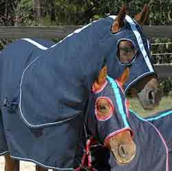 Nervous Disease In Horses – NSW, Victoria, SA