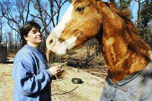 Horse Heals