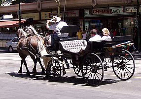 Melbourne Horse Carriage Operators Adopt New Code Of Practice