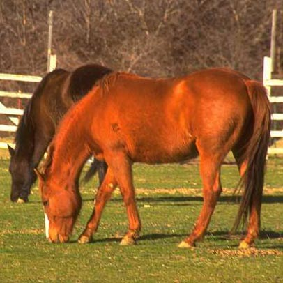 Legal Challenge To AI Thoroughbred Breeding