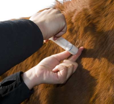 Horse Owners Ensuring An Emergency Response