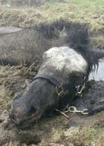 Horse Rescued From Mud Bath