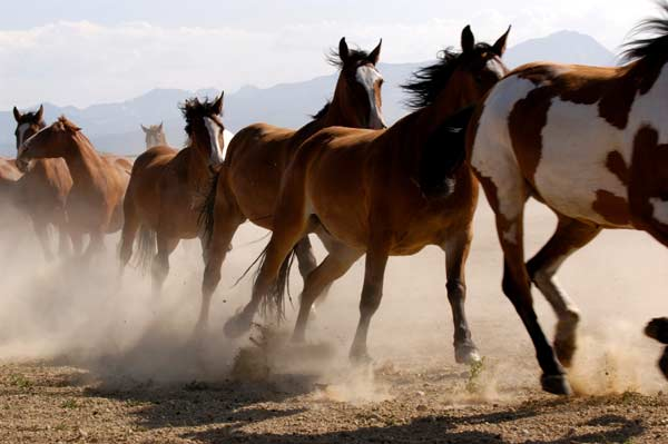 11yo On A Mission To Save America's Wild Horses