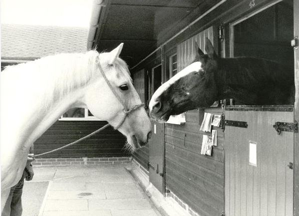 The Horse Trust Remembers Hyde Park Horses Sefton And Echo