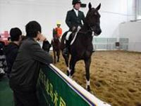 Australian Representative Appointed For China Horse Fair